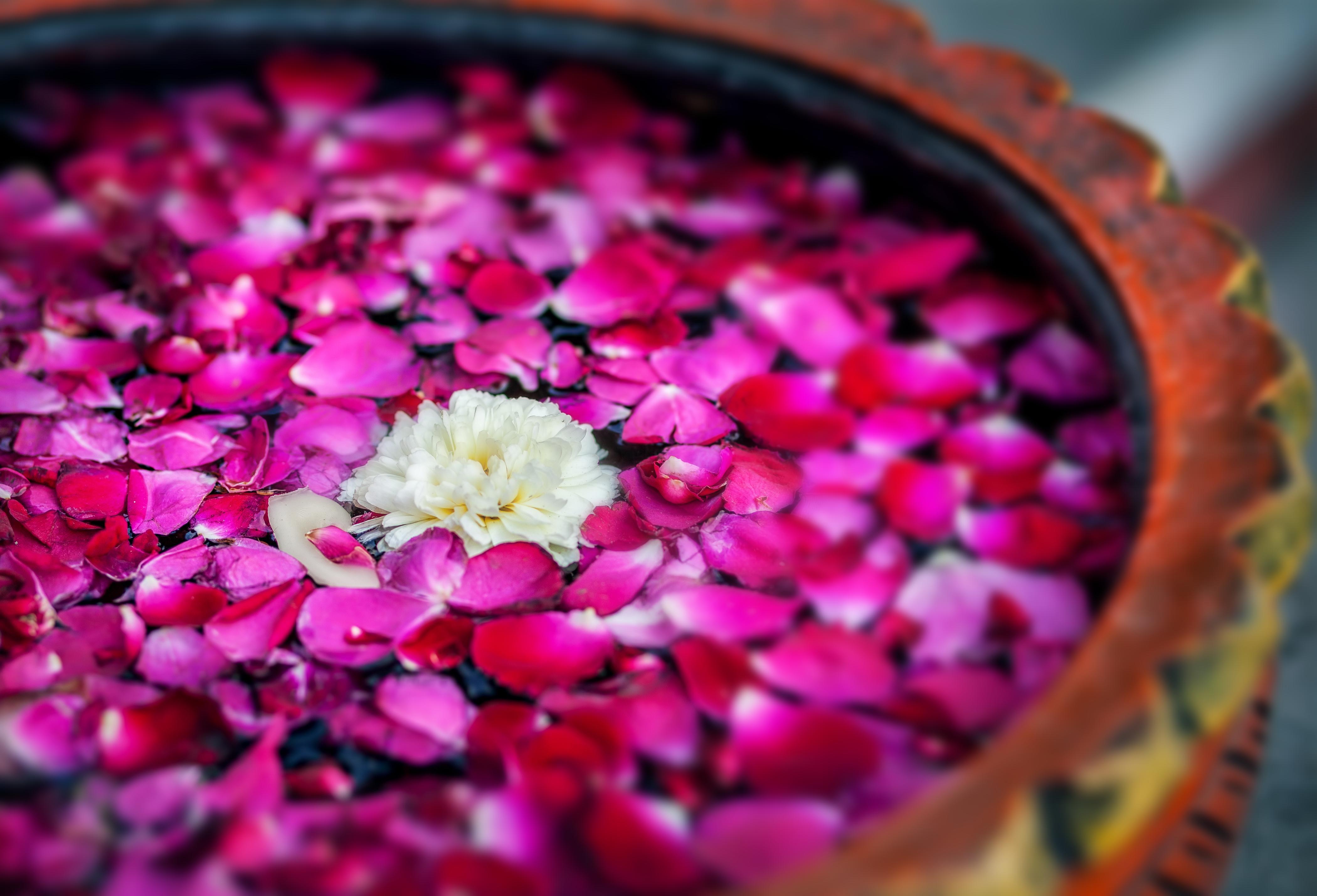 Blütenbletter in Wasser (Schale) pink/weiß/rot